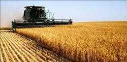 AI pertanian Pasar